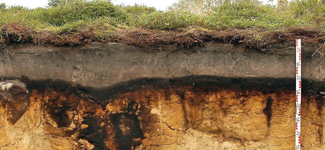Ein anschauliches Bodenprofil